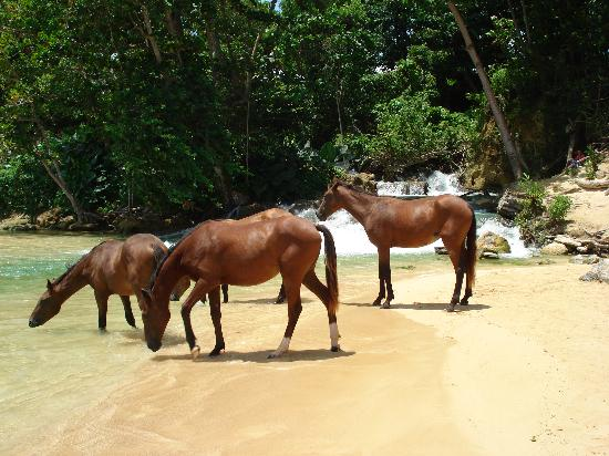 Jamaica Inn: Horses - Laughing Waters