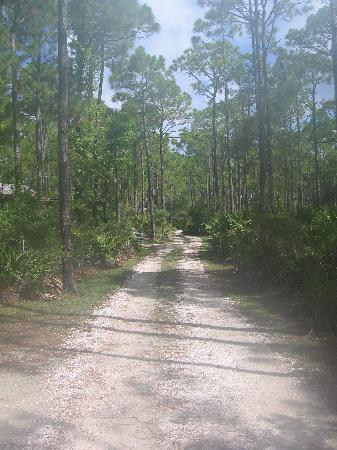 Old Saltworks Cabins: Road to the cabins