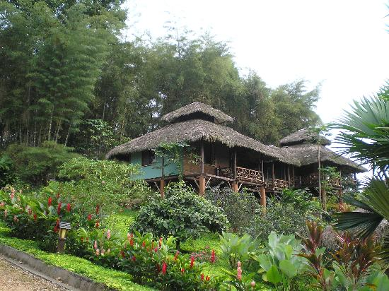 Arasha Tropical Rainforest Resort & Spa: some of the bunglows