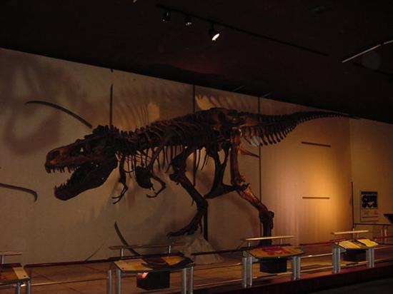 Free Spirits at Noisy Water : A T. rex named Sue travelling exhibit at the Hubbard Museum of the American West