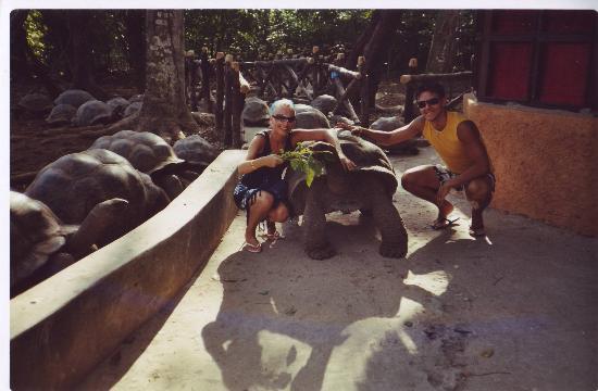 VOI Kiwengwa Resort: noi sull'isola delle tartarughe da non perdere...