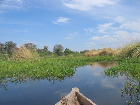 ‪‪Okavango Delta‬, بوتسوانا: Cruising the Okavanga Delta‬