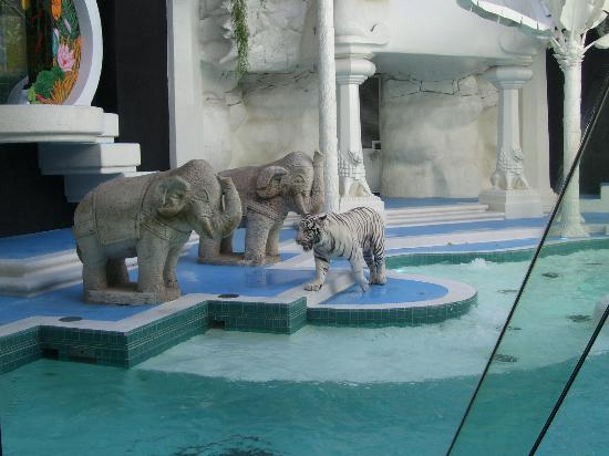 White Tiger Habitat at the Mirage: White Tiger pacing back and forth