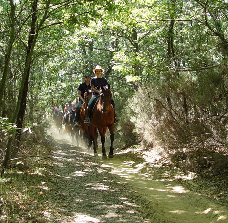 Horseback riding in Tuscany Wine Tasting : horsriding in the Tuscan countryside!