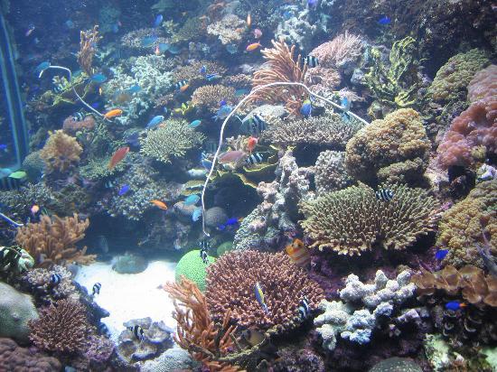 Sentosa Island, Singapore: Bright fish
