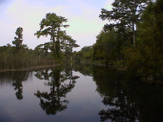 Wakulla Springs, FL: River Boat Tour