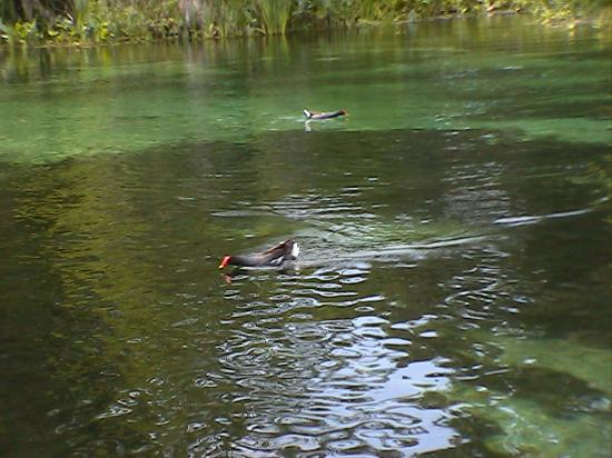 Wakulla Springs, FL: Beautiful River
