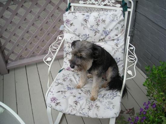 Gateway Bed and Breakfast: Scrappy, the Greeter at the Gateway
