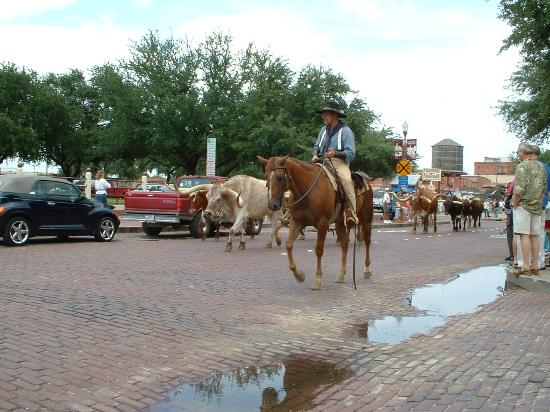 ‪لاكوينتا إن آند سويتس دالاس: weekend longhorn cattle drive down main street‬