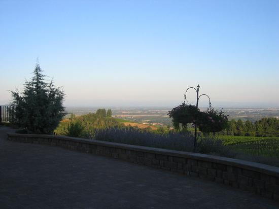 Black Walnut Inn & Vineyard: View from main courtyard