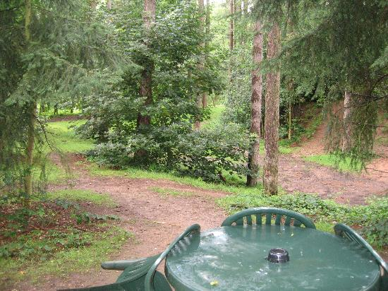 Center Parcs Sherwood Forest: view from our patio doors