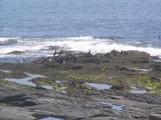 Lobster Shack: Birds on the rocks