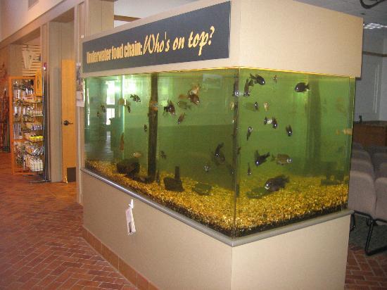 Aquarium Picture Of Lake Dardanelle State Park