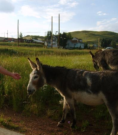 Gold King Mountain Inn: Donkeys that roam the town