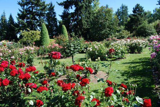 Roses In Garden: Roses With Grassy Paths At The Portland Rose Gardens