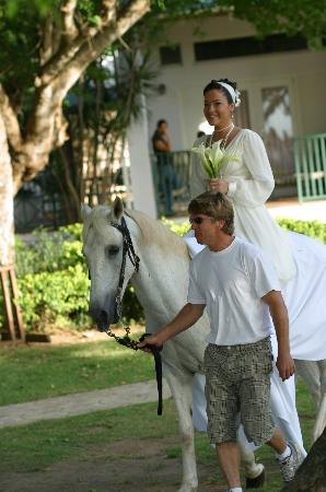 Villa Montana Beach Resort: The white horse