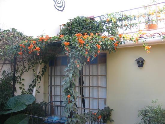 Bloomers-Salta Bed & Brunch: Bloomers garden