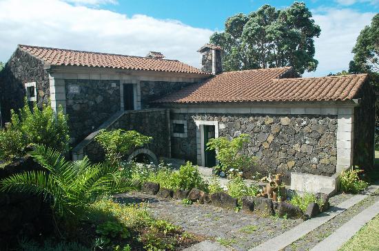 Hotel Aldeia da Fonte : Exotic plants