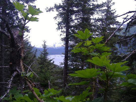 Alaska's Sadie Cove Wilderness Lodge: View from the Trail behind Sadie Cove