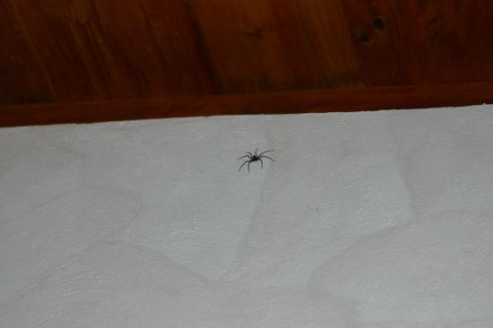 Vulcano Lodge: You gotta like spiders!