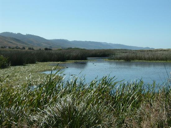 The Lodge at Point Reyes: Estuary on path to Limanteur Beach