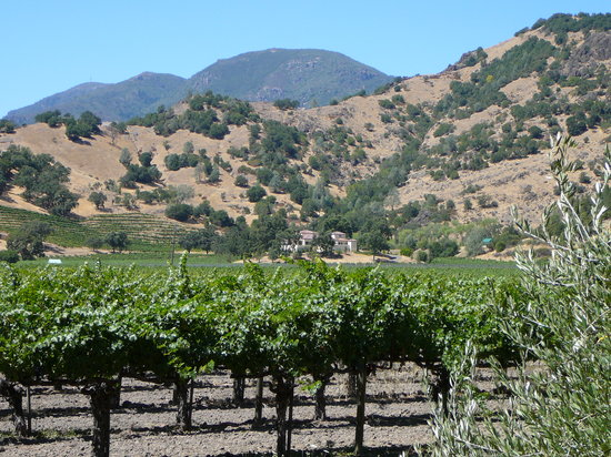 Calistoga, Kalifornie: Chateau Montelena's Vineyards in the Shadow of Mt. Helena