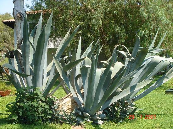 Sarigerme, Turquia: Amazing plants