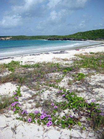 Isla de Vieques, Puerto Rico: Playa La Chiva (Blue Beach)
