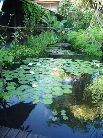Hotel Santika Premiere Beach Resort Bali: As you go from the lobby to the guest area you cross this pond