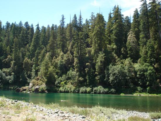 Crescent City, CA: the river and redwoods by the picnic area