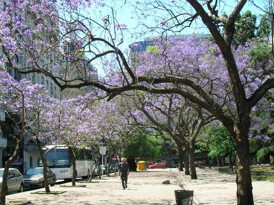 Loi Suites Arenales Hotel: Jacarandas in bloom