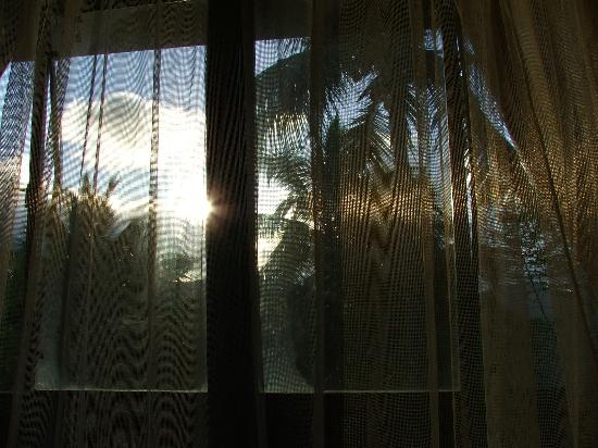Crystals: view waking up in the coco palm