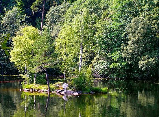 Oslomarka: Islet in Lake Noklevann