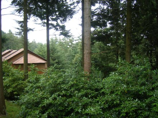 Center Parcs Longleat Forest: View from the room