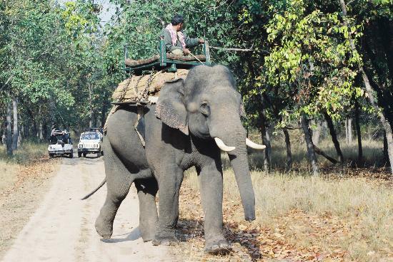 Nature Heritage Resort: Safari Elephant