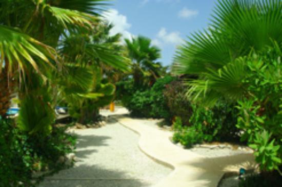 Tropical Inn Bonaire: Ein Blick in den schön angelegten Garten