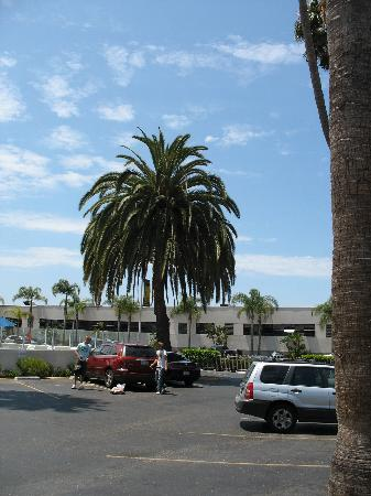 Motel 6 San Diego Airport - Harbor: Palm tree by the pool.