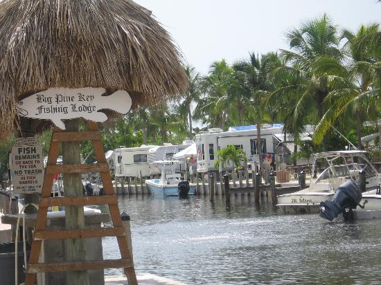 Key deer picture of big pine key fishing lodge big pine for Big pine key fishing report