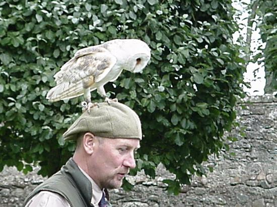 Golspie, UK: owl on trainer's head