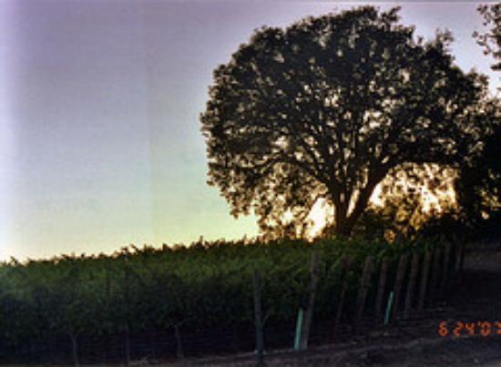 Summerwood Winery & Inn: View across street from Summerwood Inn