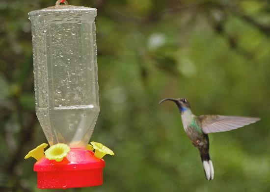 Arco Iris Lodge: Hummingbird