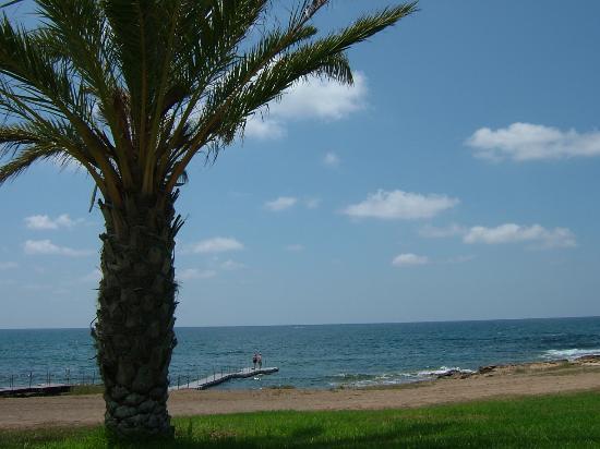 Constantinou Bros Athena Royal Beach Hotel: View from gardens