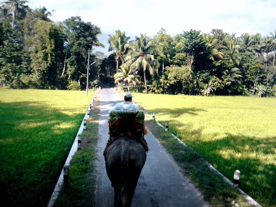 Amanjiwo Resorts: Elephant ride from Borobudur back to Amanjiwo