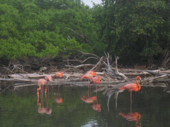 Decameron Isla Palma: pink flamingoes