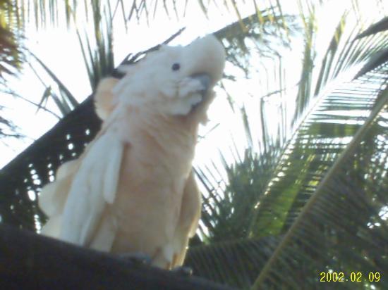 Los Roques National Park, Venezuela: Mitbewohner im Hotel Isla Coche