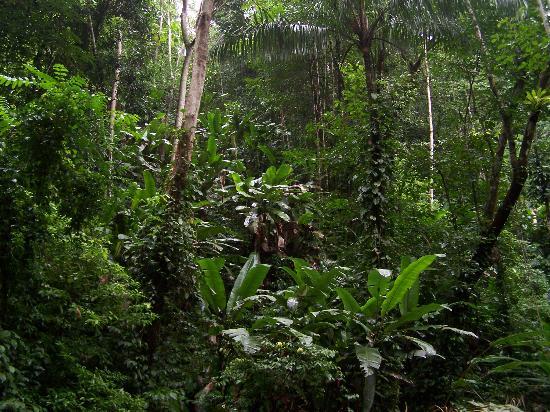 Jinetes de Osa Hotel: Rainforest walk