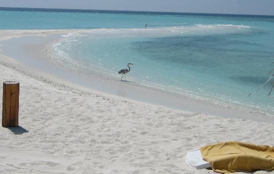 Дхиггири: La spiaggia