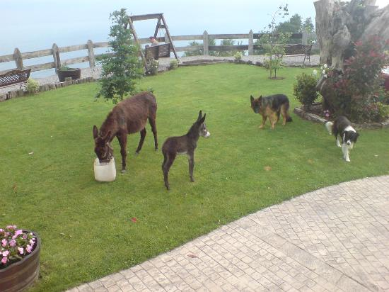 Agroturismo Maddiola: Baby donkey, born during our stay