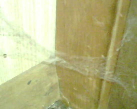 Depe Dene Resort : Some of the cob webs