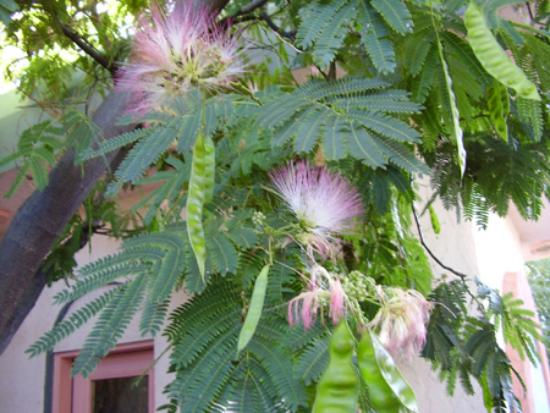 Calumet and Arizona Guest House: A tree in bloom at Calumet